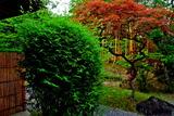 6.12----竹隠の庭