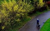 21----山茱萸の咲く道