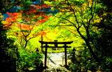 11.10----大道神社の参道