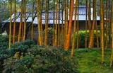 08---竹林と茶室「竹隠」