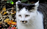 11.15----何を見つめている野良猫