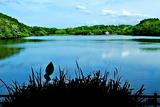 6.01----山田池観月堤