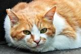 6.11----エジソン碑前の野良猫1