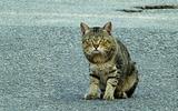 17----農道にいた飼い猫