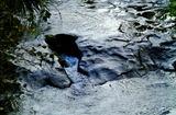 11.10----天神社前の小川