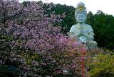 15----桜と大仏