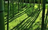 09----苔に竹の影