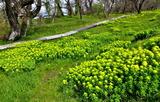 20---野漆の花