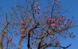 06---紅梅の花