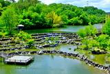 5.24----水景園