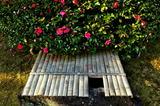 25---竹の井戸の蓋と山茶花の花