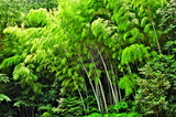 6.17----男山の竹林