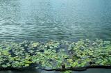 22----酢入れの葉と池