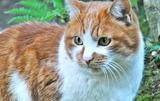 17---野良猫