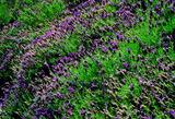 5.23----紫