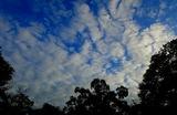11.02----流れ雲むむむむ