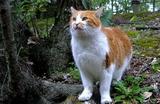 19----野良猫