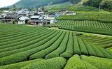 21---茶畑と山の中の集落
