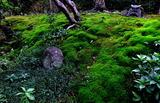 11.09----苔の庭