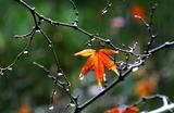 08---雨でよみがえった枯れ葉