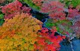 11.04----水景園紅葉1
