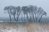 14---湖岸の樹む