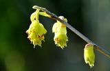 12----トサ水木