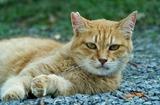 08----野良猫