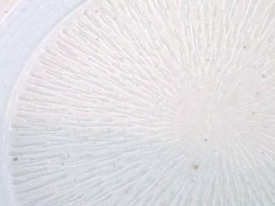 古白磁皿アップ