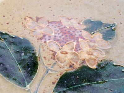 紫陽花皿アップ