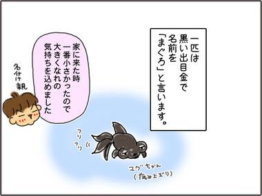 きんぎょ2