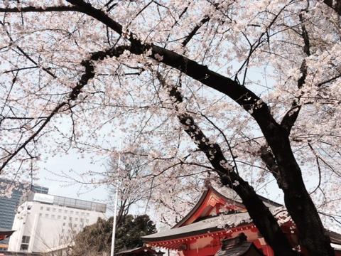 2016桜6