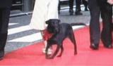 TIFF・盲導犬