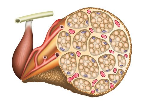 筋肉筋の構造  (1)  3 ぼかし