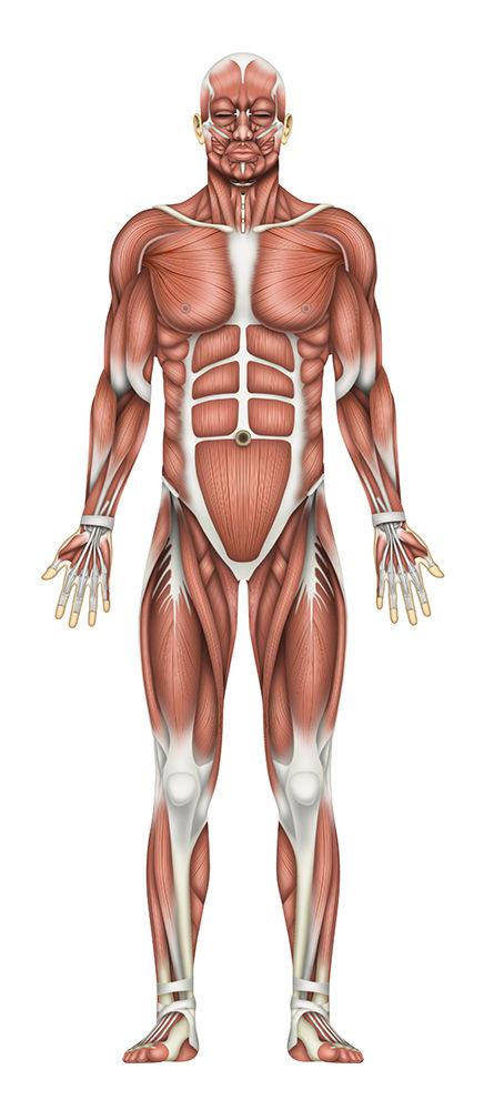 8ページ 前 全体の筋肉の色調整