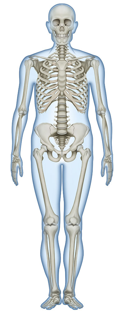 1巻き 骨全体前 合流 色補正