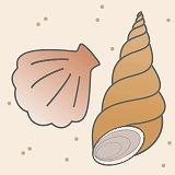貝のイラスト・絵カード素材|海の生きもののイラスト