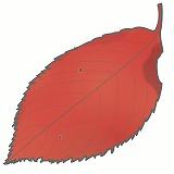 さくらの葉・紅葉のイラスト・絵カード素材|秋のイラスト