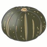 かぼちゃのイラスト・絵カード素材 夏の野菜のイラスト