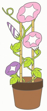 あさがおのイラスト・絵カード素材|夏の花のイラスト