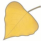 ポプラの葉・紅葉のイラスト・絵カード素材|秋のイラスト
