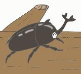 カブトムシのイラスト・絵カード素材|夏の虫のイラスト