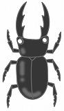 クワガタのイラスト・絵カード素材|夏の虫のイラスト