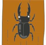 くわがたのイラスト・絵カード素材|夏の虫のイラスト