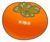 柿のイラスト・絵カード素材|秋のくだもののイラスト
