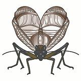 こおろぎのイラスト・絵カード素材 秋の虫のイラスト