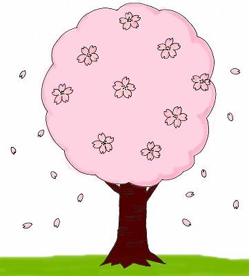 桜のイラスト(お花見のイラスト)/m