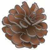 まつぼっくりのイラスト・絵カード素材|秋の木の実のイラスト
