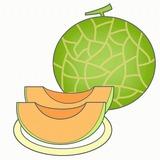 メロンのイラスト・絵カード素材|夏の果物のイラスト