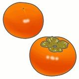 柿のイラスト・絵カード素材|秋の果物のイラスト